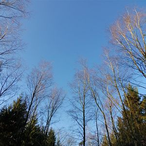 Blue skies and naked trees